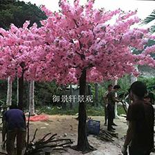 景观桃花树