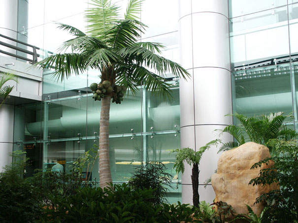 仿真室外椰子树
