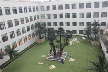 校园仿真棕榈树