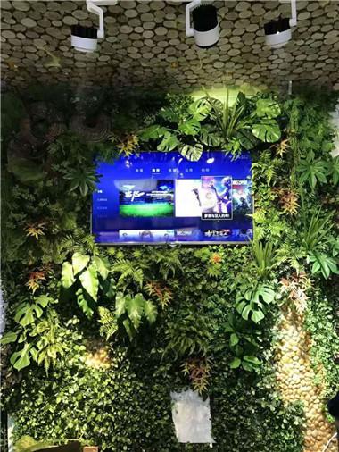 电视绿植墙