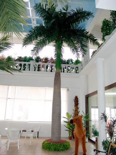 大型室内霸王椰