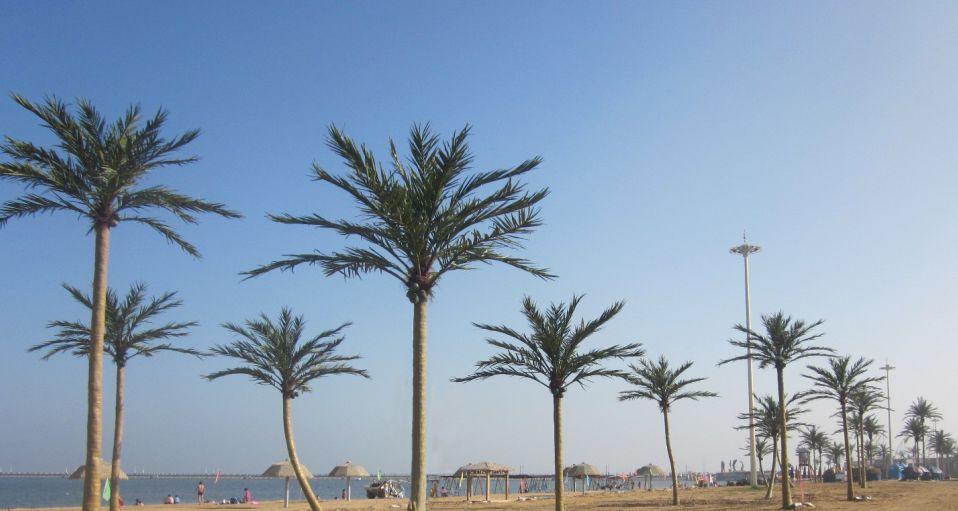 大型室外椰子树