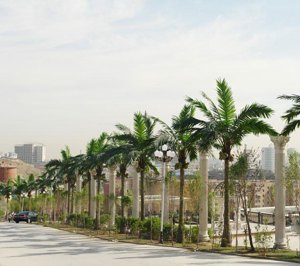 景区椰子树