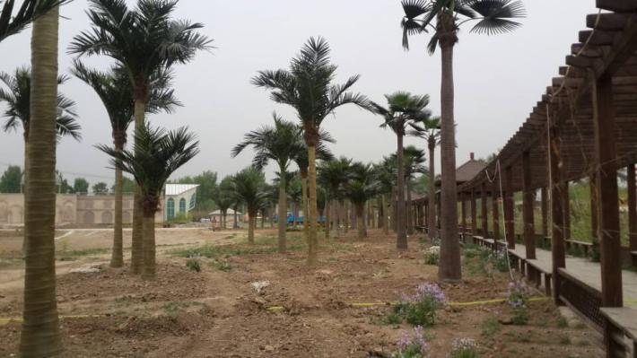 园区椰子树