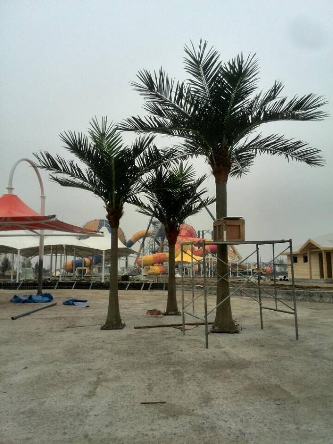 公园椰子树