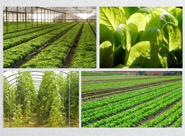 有机果蔬种植