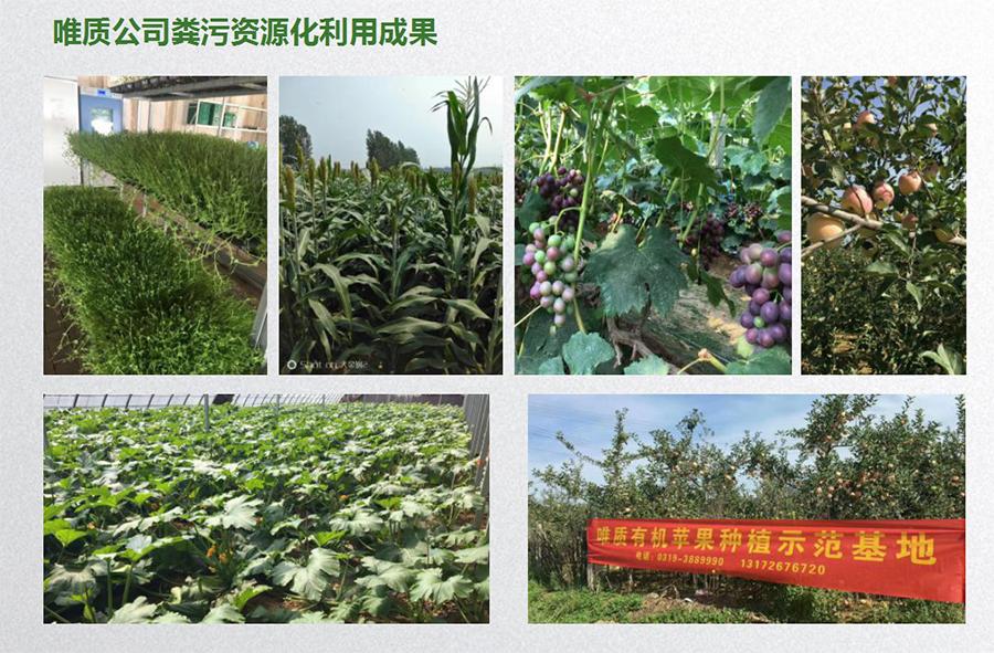 唯质有机果蔬种植示范基地