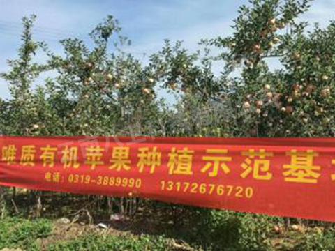 有机苹果种植示范基地