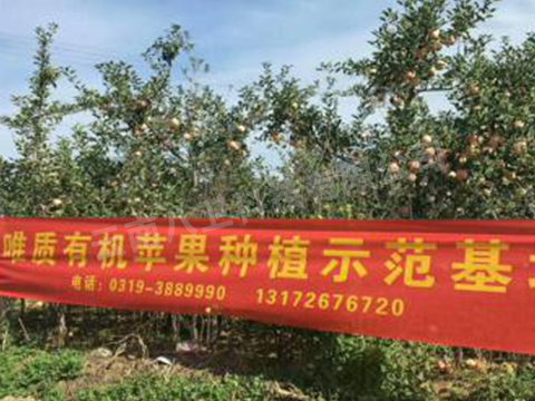 有机苹果种植示范基地落地昆明