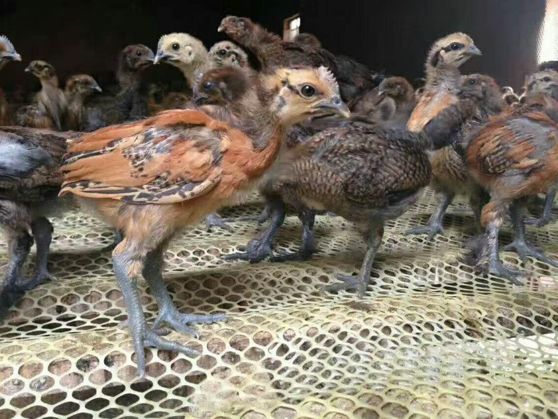云南佳育禽业有限公司