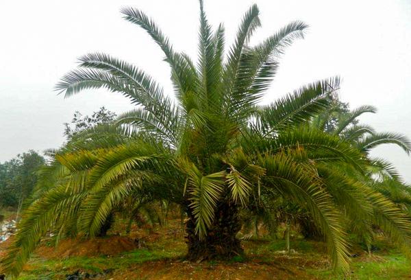 植物在园林澳门梅高梅网络平台中的重要作用