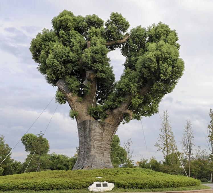 园林景观绿化常用植物-香樟