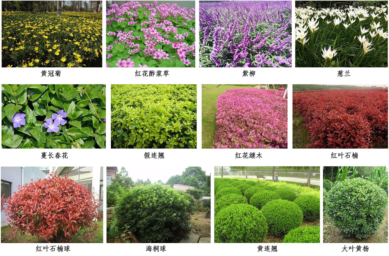 因地制宜,利用丰富的乡土植物,打造富有变化的植物群落变化景观