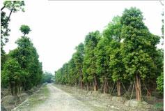园林绿化过程中需要特别的注意哪些事项呢
