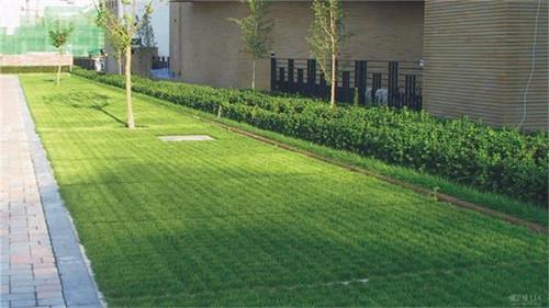 生态城市舔砖加瓦中的一砖——「植草砖」