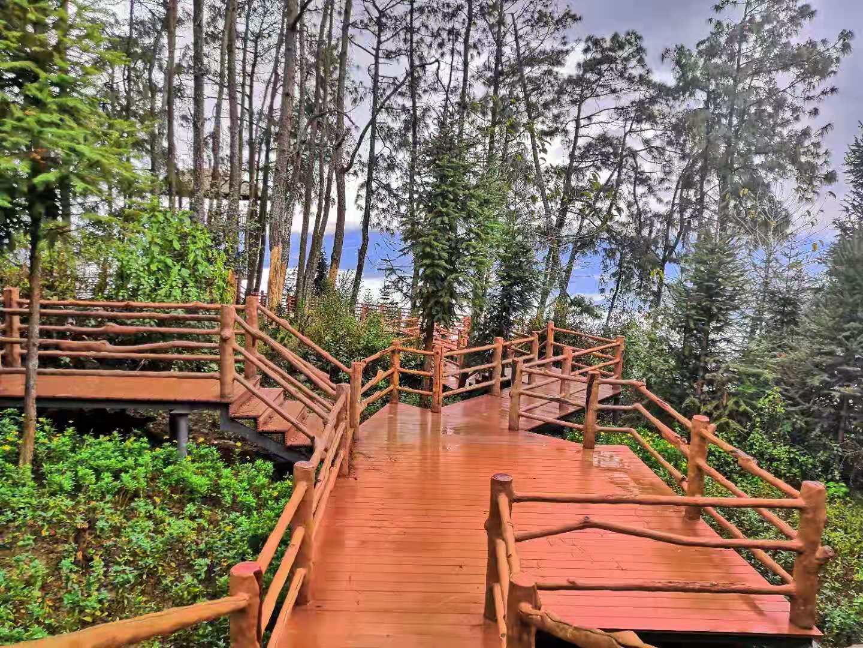 云南园林景观设计常用到的一些景观树