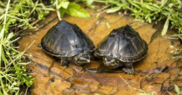 迪庆打井施工队分享一下为什么古人打井后要在井里放2只乌龟?