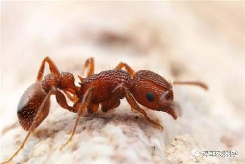 云南滅螞蟻