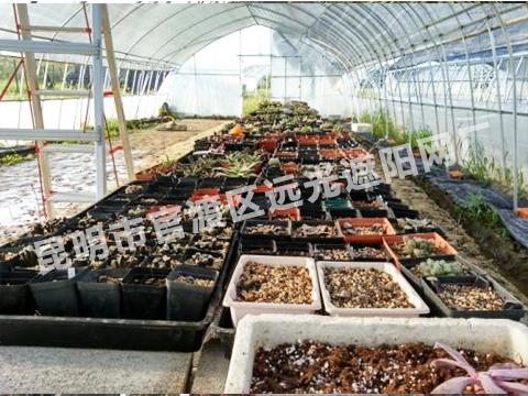 云南农村花卉大棚厂家