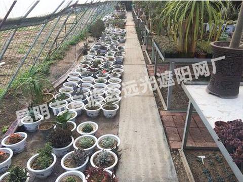 云南花卉多肉植物大棚批发商