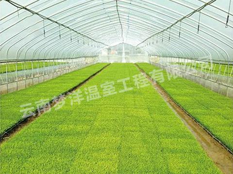 水稻专用膜
