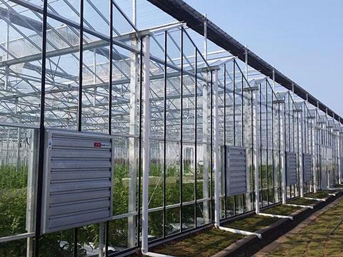 新型温室大棚
