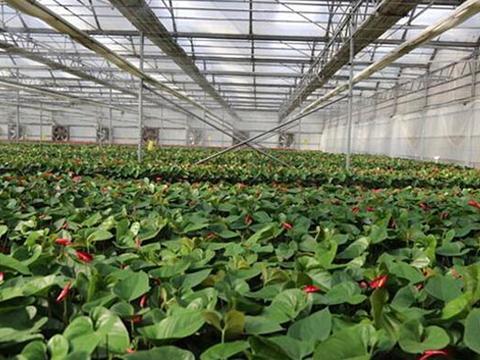 热带水生植物花卉大棚