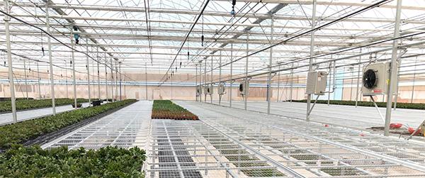 温室大棚设施—移动苗床的特点