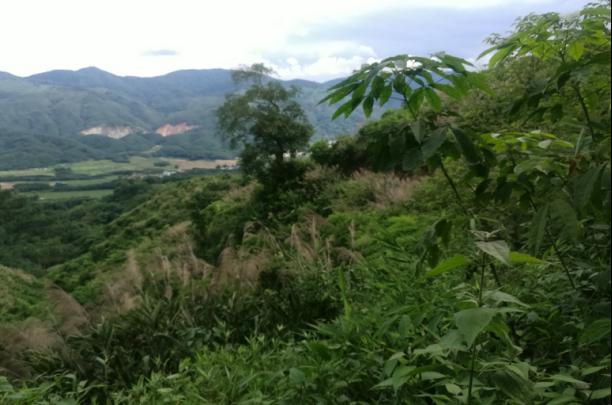 国营**农场一宗国有划拨农业开发用地土地使用权价格评估