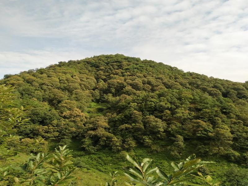 寻甸县***国家森林公园森林资源(林木及林地等)资产价值评估