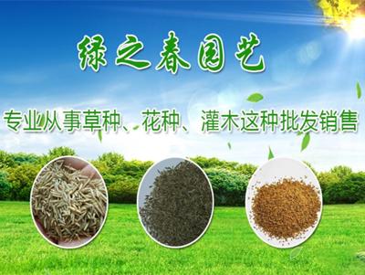 云南網絡推廣公司為大家推薦昆明綠之春園藝