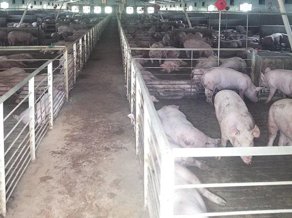 云南养猪场污水处理设备