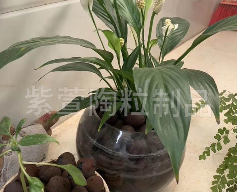 贵州花卉陶粒生产厂家