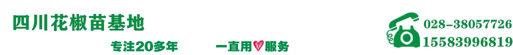 四川花椒繁育基地