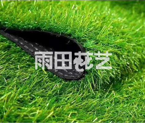 批发地毯草