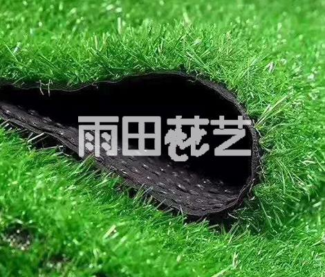 地毯草批发