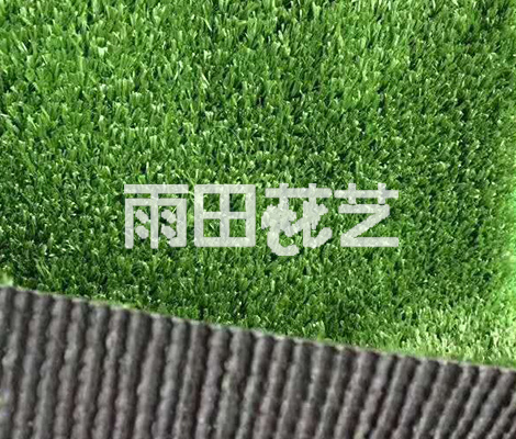 地毯草批发厂家