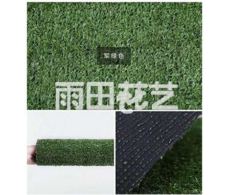 贵州地毯草批发