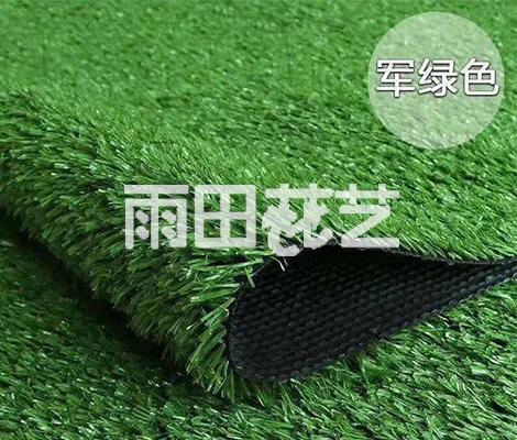地毯草出售