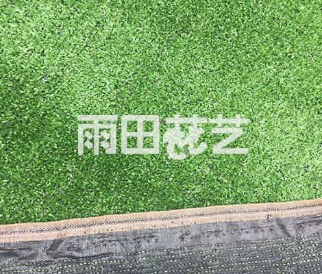 地毯草出售价格