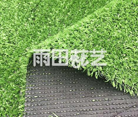 地毯草出售厂家
