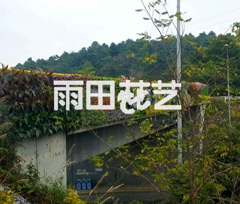 植物背景墙价格