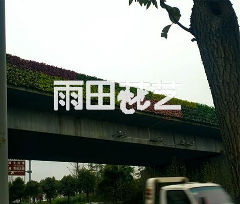贵阳植物背景墙价格