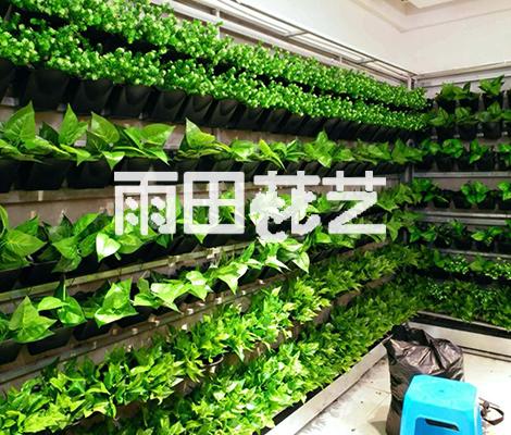 仿真植物供应