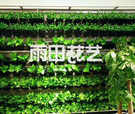 贵州仿真植物供应