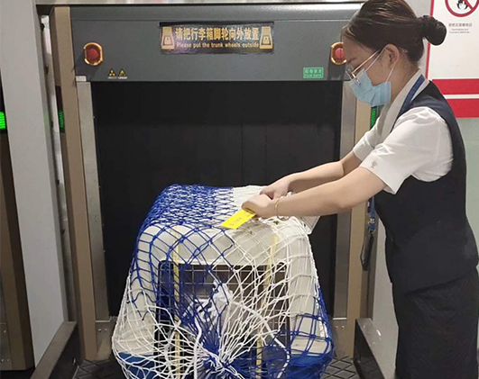 重庆宠物运输分享并非所有宠物都可以办理宠物托运手续