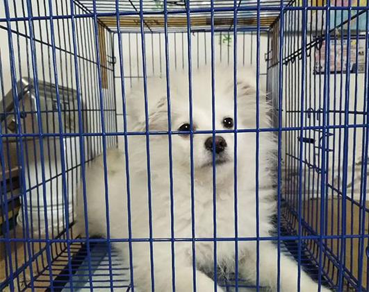 小型犬空运
