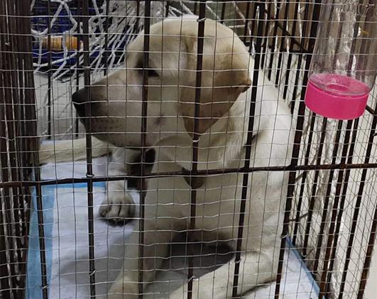 宠物狗托运有什么注意事项