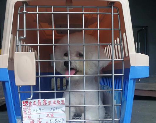 重庆越时通宠物托运