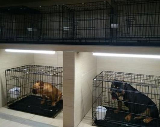 如何保證寵物托運的安全?寵物入住前的準備工作是什么